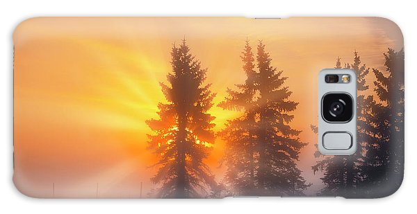Spruce Trees In The Morning Galaxy Case