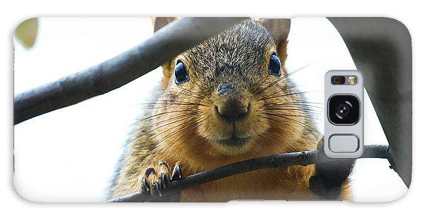 Spying Fox Squirrel Galaxy Case