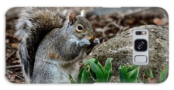 Squirrel And His Dinner Galaxy Case