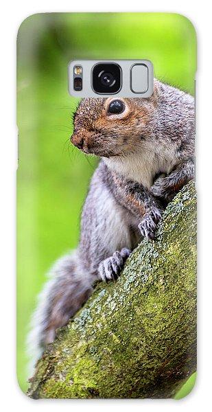 Squirrel At Greenwich Park Galaxy Case