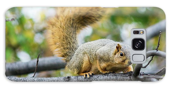 Squirrel Crouching On Tree Limb Galaxy Case