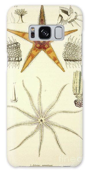 Feather Stars Galaxy Case - Starfish  Asterias Aurantiaca And Comatula Carinata by English School