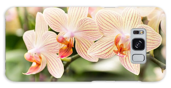 Natural Galaxy Case - Streaked Orchid Flowers. Beautiful by Pojvistaimage
