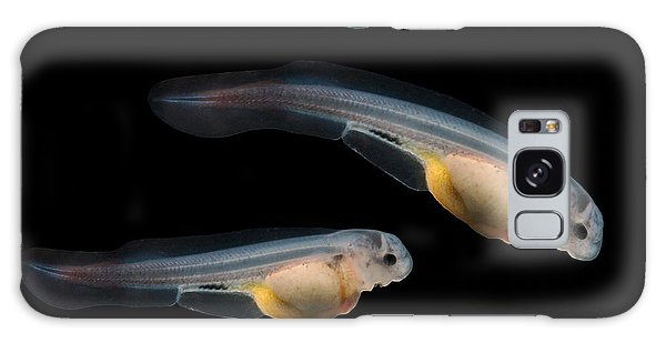 Eggs Galaxy Case - Sturgeon Fingerling 9days Old 10mm by Kletr