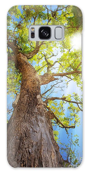 New Leaf Galaxy Case - Sun Rays Streaming Through Tree by Johan Swanepoel