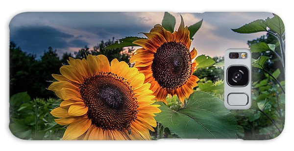 Sunflowers In Evening Galaxy Case