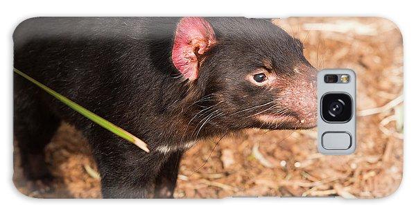 Galaxy Case featuring the photograph Tasmanian Devil In Hobart, Tasmania by Rob D