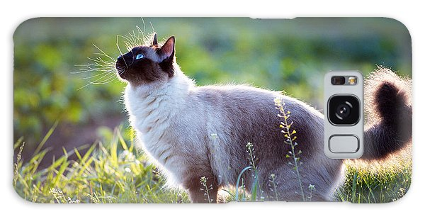 Claws Galaxy Case - The Beautiful Brown Cat, Siamese, With by Bershadsky Yuri