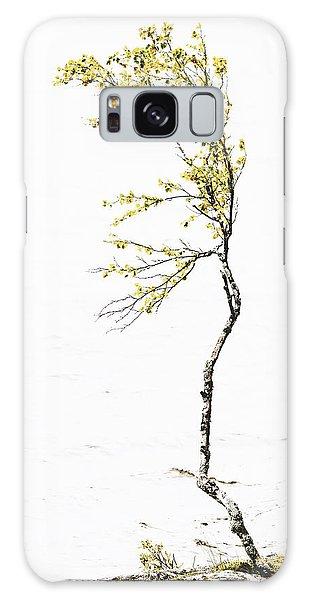 The Birch Tree Galaxy Case