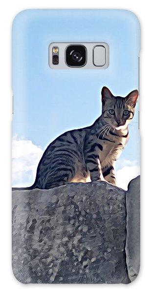 The Cat Galaxy Case