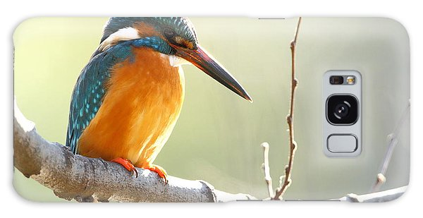 Indian Head Galaxy Case - The Common Kingfisher Alcedo by Vishal Shinde