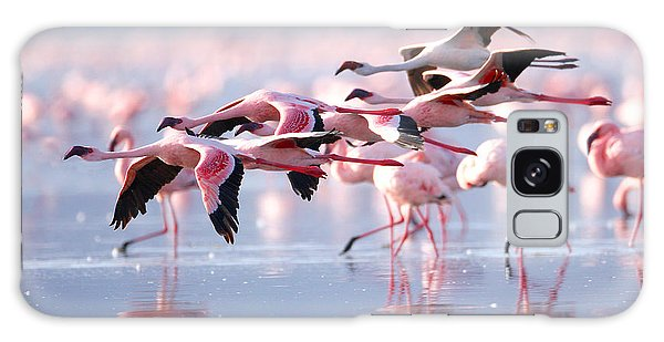 Travel Destinations Galaxy Case - The Lesser Flamingo, Which Is The Main by Worldclassphoto