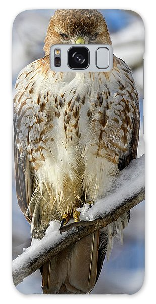 Galaxy Case featuring the photograph The Look, Red Tailed Hawk 1 by Michael Hubley