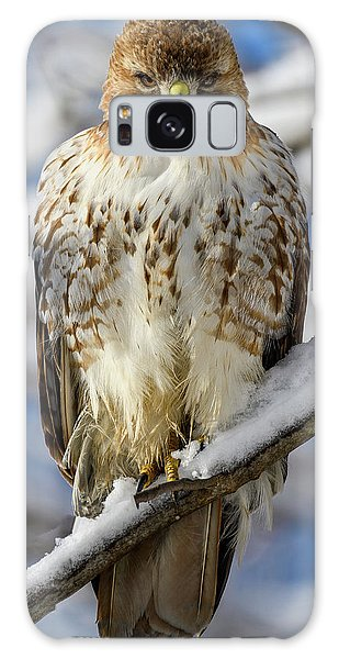 The Look, Red Tailed Hawk 1 Galaxy Case