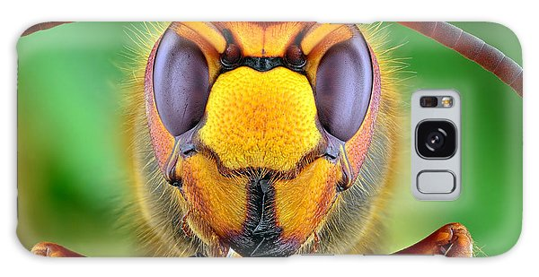 Tint Galaxy Case - The Picture Shows Hornet Vespa Crabro by Ireneusz Waledzik