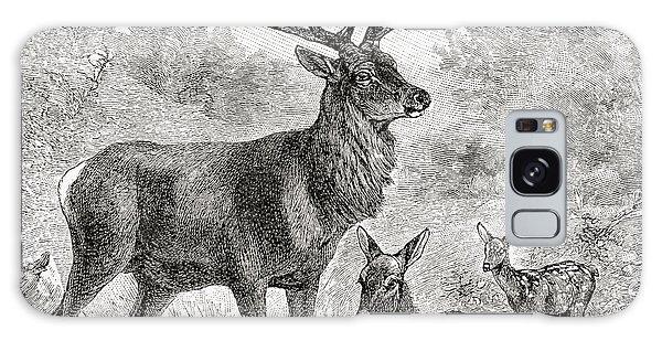 Pasture Galaxy Case - The Red Deer  Cervus Elaphus by English School