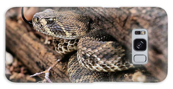 The Western Diamondback Rattlesnake Galaxy Case