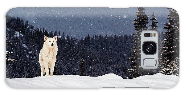 The Wolf Galaxy Case