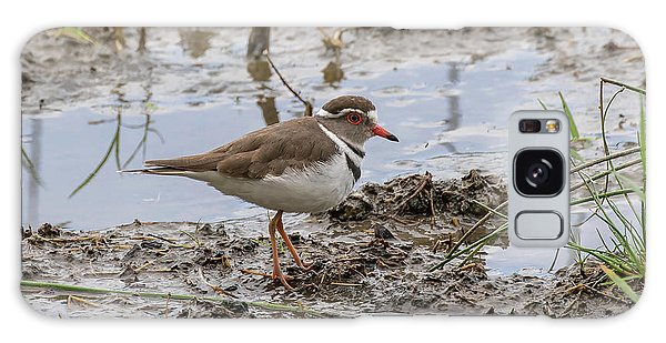 Three-banded Plover Galaxy Case