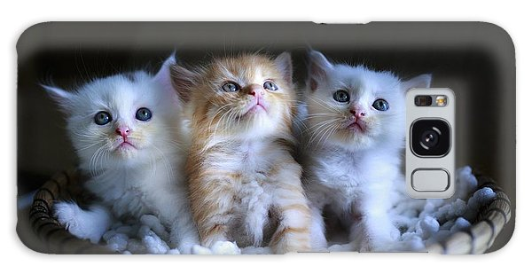 Three Little Kitties Galaxy Case