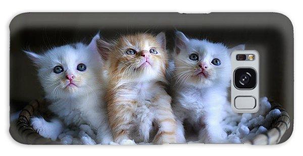 Three Little Kitties Galaxy Case