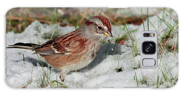 Tree Sparrow In Snow Galaxy Case