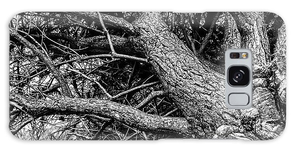 Trees, Leaning Galaxy Case