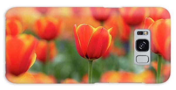 Hybrid Galaxy Case - Tulipa Worlds Favourite Flowers  by Tim Gainey