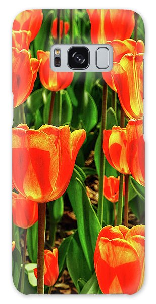Brookside Gardens Galaxy Case - Tulips 2019d by Kathi Isserman