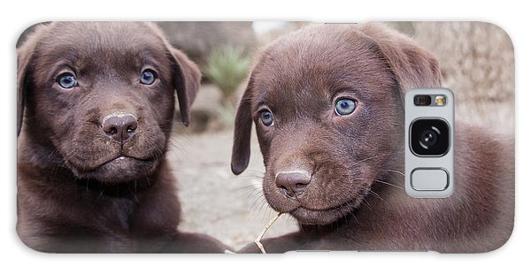 Chocolate Lab Galaxy Case - Two Chocolate Labrador Retriever by Zandria Muench Beraldo