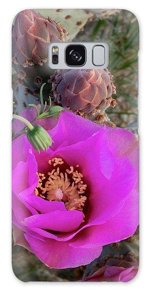 Desert Flora Galaxy Case - Usa, California Beavertail Prickly Pear by Judith Zimmerman