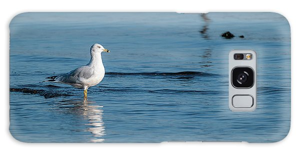 Wading Ring-billed Gull Galaxy Case