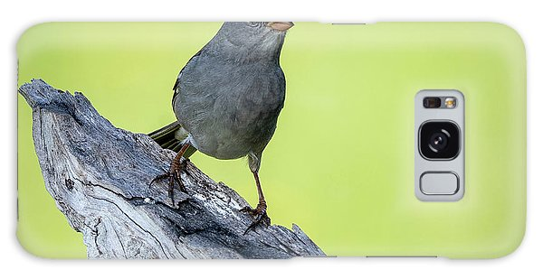 White Crowned Sparrow 1 Galaxy Case