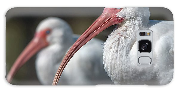 Galaxy Case featuring the photograph White Ibis by Ken Stampfer