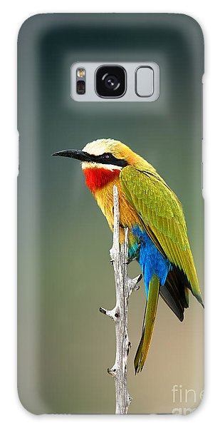 Perches Galaxy Case - Whitefronted Bee-eater Merops by Johan Swanepoel