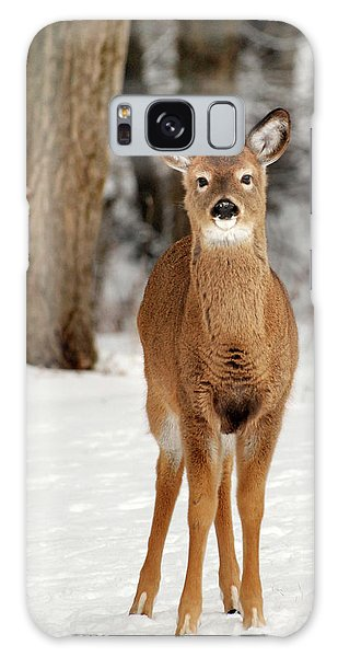 White-tailed Deer Galaxy Case - Whitetail In Snow by Christina Rollo