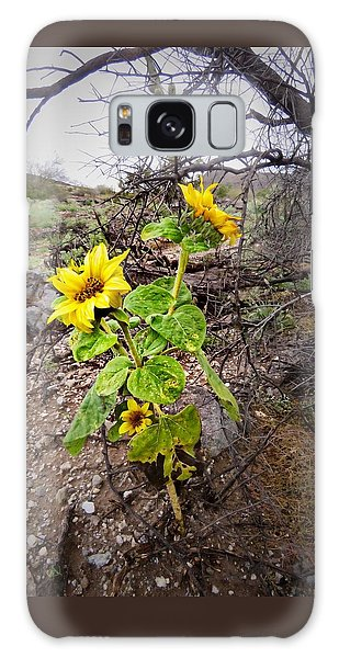 Wild Desert Sunflower Galaxy Case