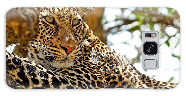 Attraction Galaxy Case - Wild Leopard Lying In Wait Atop A Tree by Travel Stock