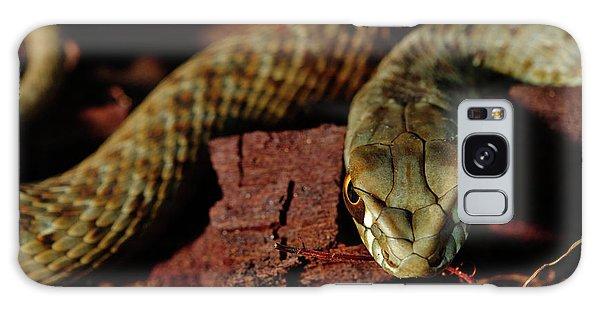 Wild Snake Malpolon Monspessulanus In A Tree Trunk Galaxy Case