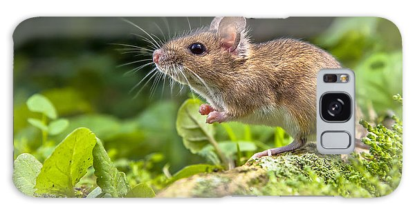Hiding Galaxy Case - Wild Wood Mouse Resting On The Root Of by Rudmer Zwerver