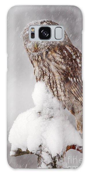 Perches Galaxy Case - Winter Wildlife Scene With Tawny Owl by Ondrej Prosicky