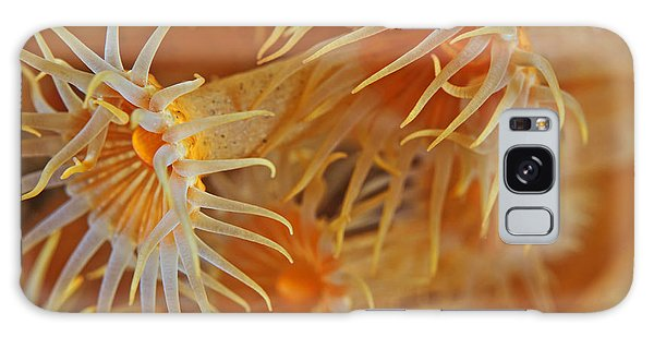 Horizontal Galaxy Case - Yellow Encrusting Anemone, Gelbe by Scubaluna