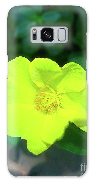 Yellow Hypericum - St Johns Wort Galaxy Case