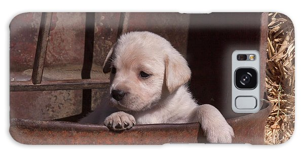 Chocolate Lab Galaxy Case - Yellow Labrador Retriever Puppy Peeking by Zandria Muench Beraldo
