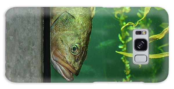 Yellowtail Rockfish Playing Peekaboo Galaxy Case