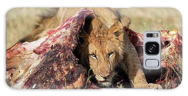 Young Lion On Cape Buffalo Kill Galaxy Case