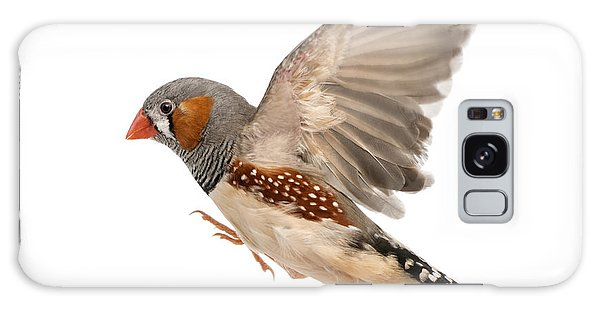 No People Galaxy Case - Zebra Finch Flying, Taeniopygia by Eric Isselee