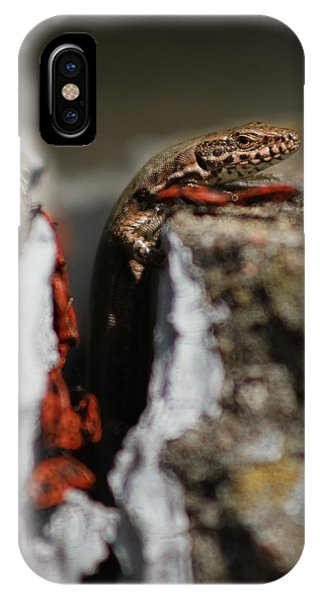 IPhone Case featuring the photograph  A Lizard Emerging From Its Hole by Stwayne Keubrick
