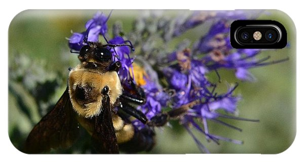 Bee Bombus On Spirea IPhone Case