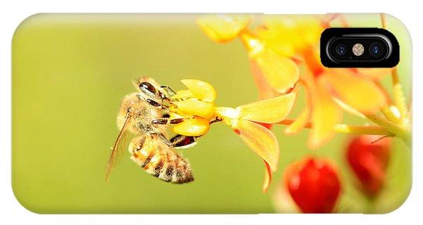 Bee On Milkweed IPhone Case